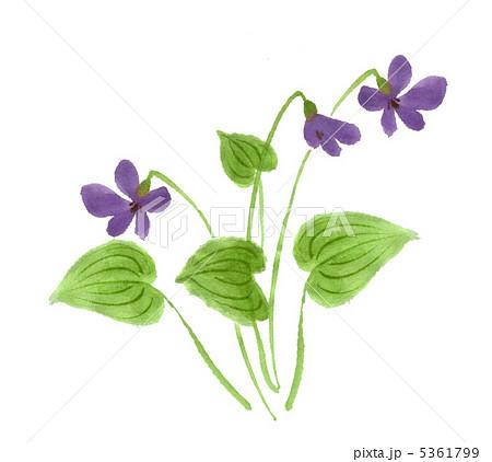 スミレ 菫 花 イラストの写真素材 Pixta