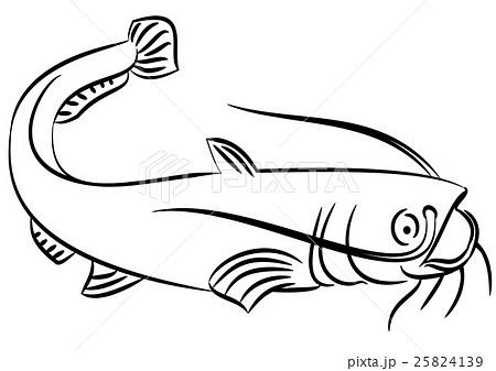 catfish illustrations pixta Types of Catfish cat fish illustration