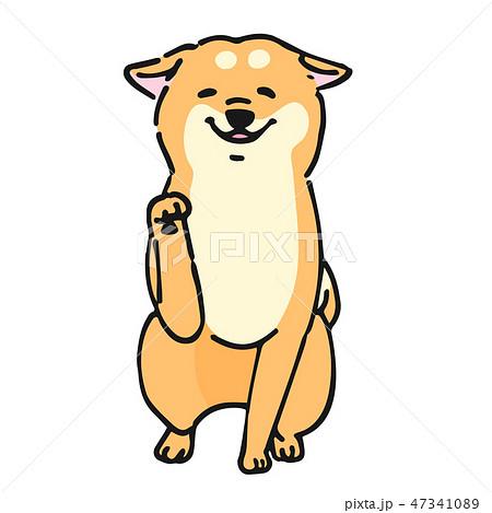 柴犬 かわいいのイラスト素材 Pixta