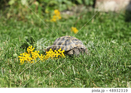 Tortoise Photos Pixta