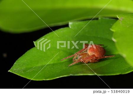 鬼蜘蛛の写真素材 - PIXTA
